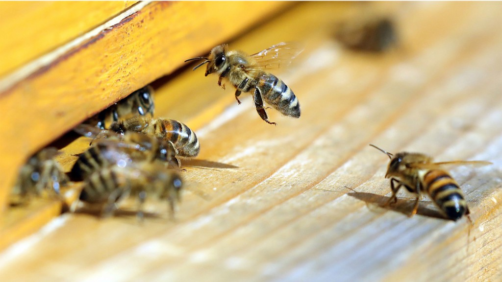 Organic farming near hives can help bees, study says - Marketplace