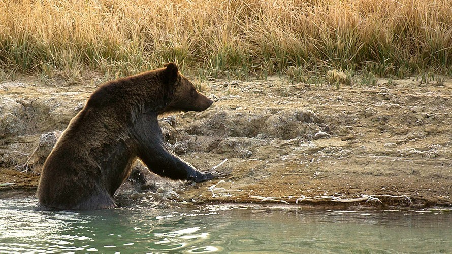Opinion: A bear market could hit U.S. stocks any time now