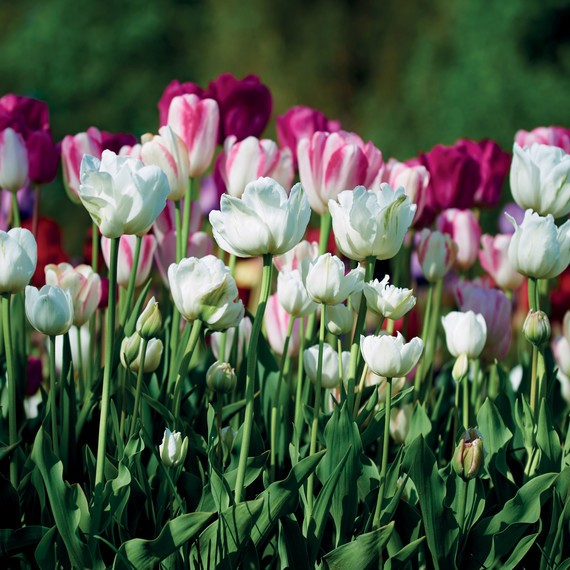 The Best Flowers to Plant for a Beautiful Cutting Garden