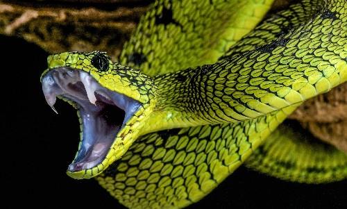Fossils Of Prehistoric Legged Snake Explain The Evolution Slithering Reptiles