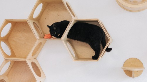 10 fancy cat trees that look like modern art