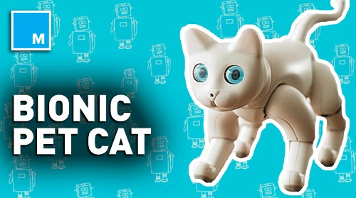 This bionic cat could be a purrfect companion — Strictly Robots