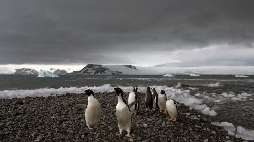Antarctica may have just set its highest temperature on record
