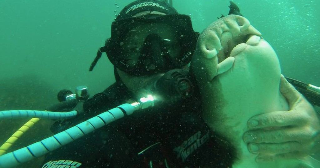 Man and his shark best friend are quite the underwater power couple
