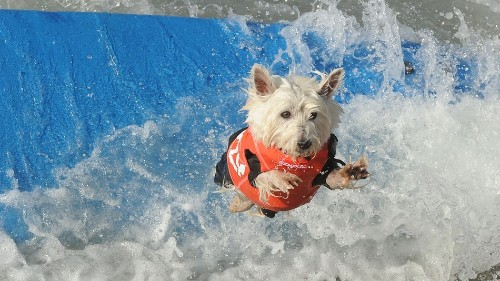 Surfing dogs were definitely this weekend's best sports highlight