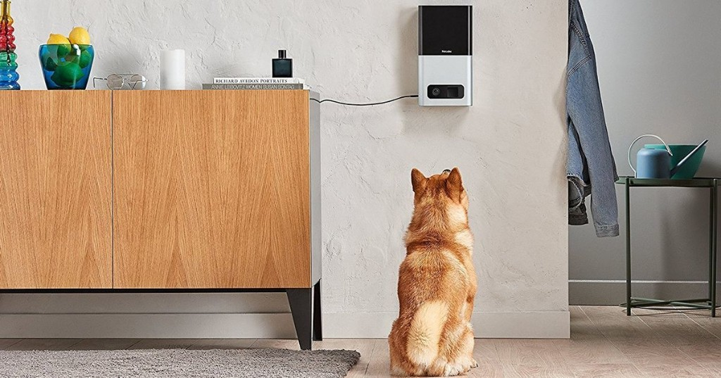 8 of the best pet cameras for keeping tabs on your cat or dog