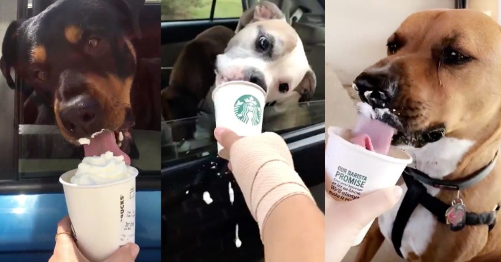 Starbucks barista shares video of a very good dog hilariously devouring a Puppuccino