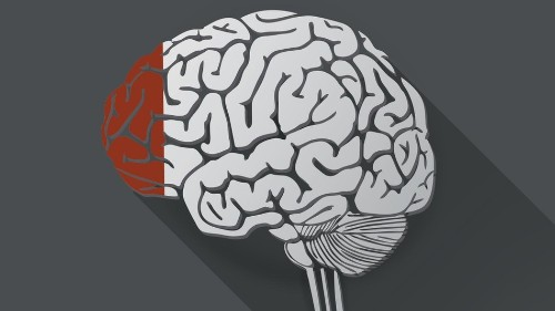 Hollywood Myth, Busted: Humans Use Far More Than 10% of Their Brains