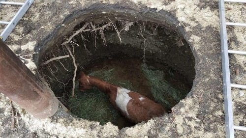 This unlucky horse fell into a 14-foot sinkhole—and escaped