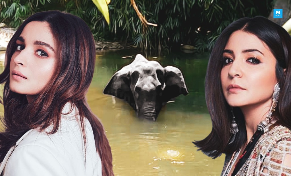 'Is This A Sick Joke?' Alia Bhatt, Anushka Sharma And Others React To Inhumane Killing Of Pregnant Elephant In Kerala
