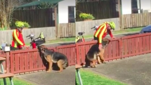 Mailman and big dog share a heartwarming daily routine