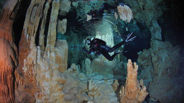 The best underwater photography of 2015 illuminates rarely seen marine life