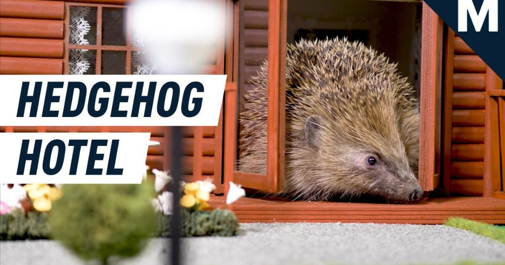 At long last, there's a holiday park just for hedgehogs