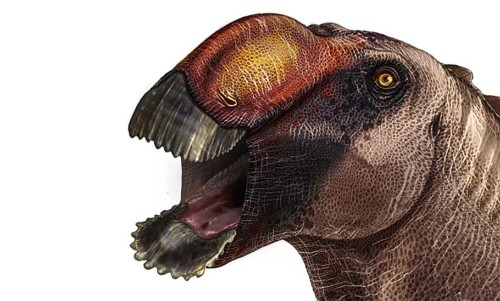 Paleontologists Discover Strange New species Of Duck-Billed Dinosaurs