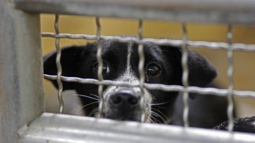 Taiwan bans putting stray animals to death