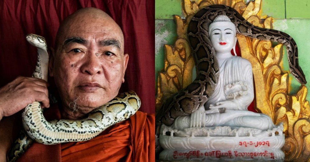 Myanmar monk rescues threatened snakes and shelters them in his temple