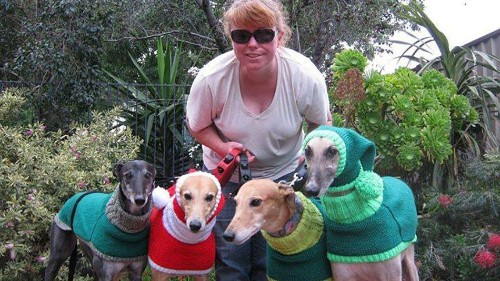 A British woman is knitting woolly dog hats to help homeless greyhounds