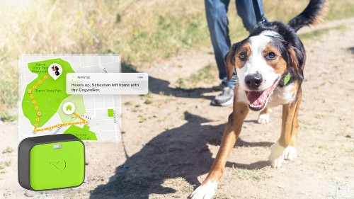 Save $20 on Whistle GO and track your dog's location and health