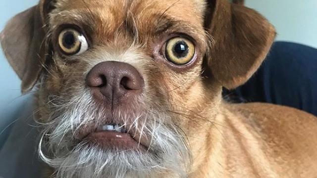 Bacon the very concerned-looking dog is your new spirit animal