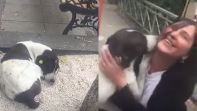 Watch this dog reunite with his owner after 3 years on the streets