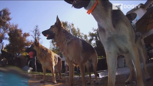 DirecTV to Offer Programming for Dogs