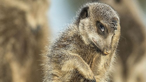 9 hilarious wildlife photos that show off nature's ridiculous side
