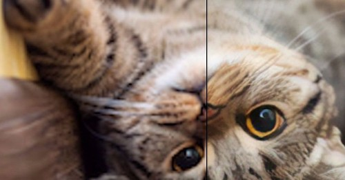 Website uses neural networks to enlarge small images, and the results are pretty magical