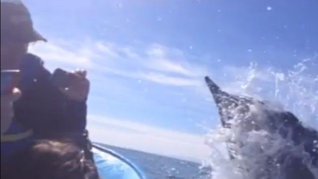 Boater in Baja Slapped in the Face by an Enormous Whale