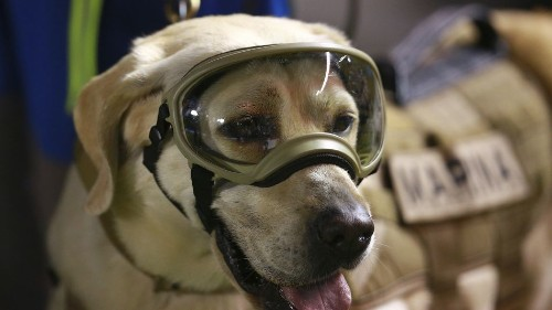 Famous Mexican rescue dog Frida retires from the line of duty