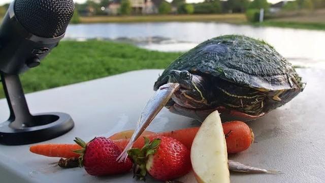 Turtle ASMR is cute as (s)hell
