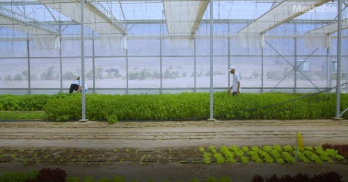 Restorative farm produces food, fresh water, and clean energy in the desert