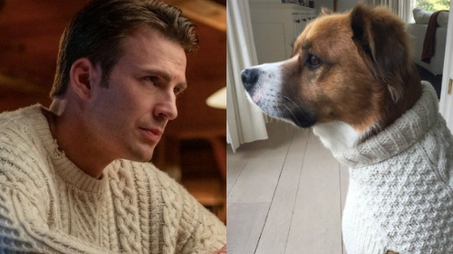 Here's Chris Evans' dog in a white sweater. You are welcome.
