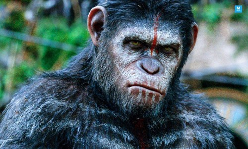 Sound The Alarms! There's Going To Be Another 'Planet of the Apes Film By 'Maze Runner' Director - Entertainment