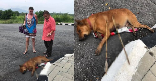 Someone brutally murdered a dog with two arrows in Malaysia - Culture - Mashable SEA