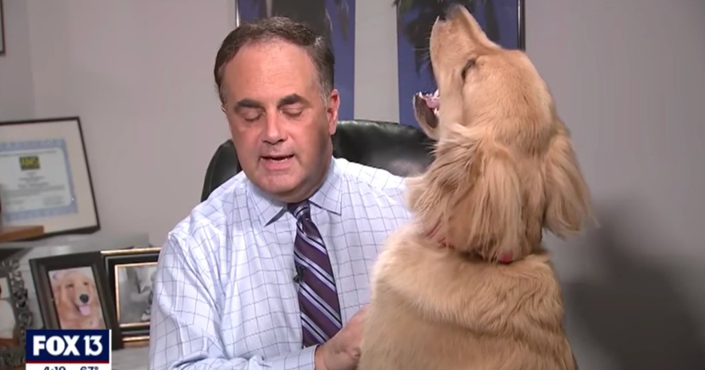 Dog interrupts meteorologist's at-home broadcast in the best way possible