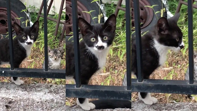 Cat with another cat on its face is double adorbs