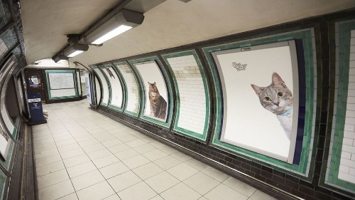 This Tube station now has pictures of cats instead of ads