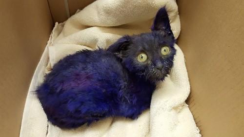 Rescued purple cat befriends blind shelter cat