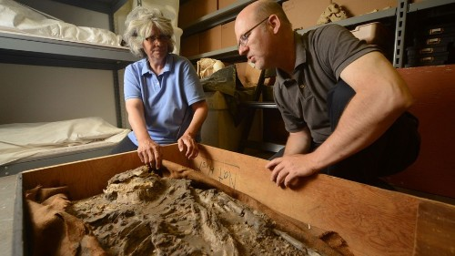 6,500-Year Old 'Noah' Found in Museum Basement