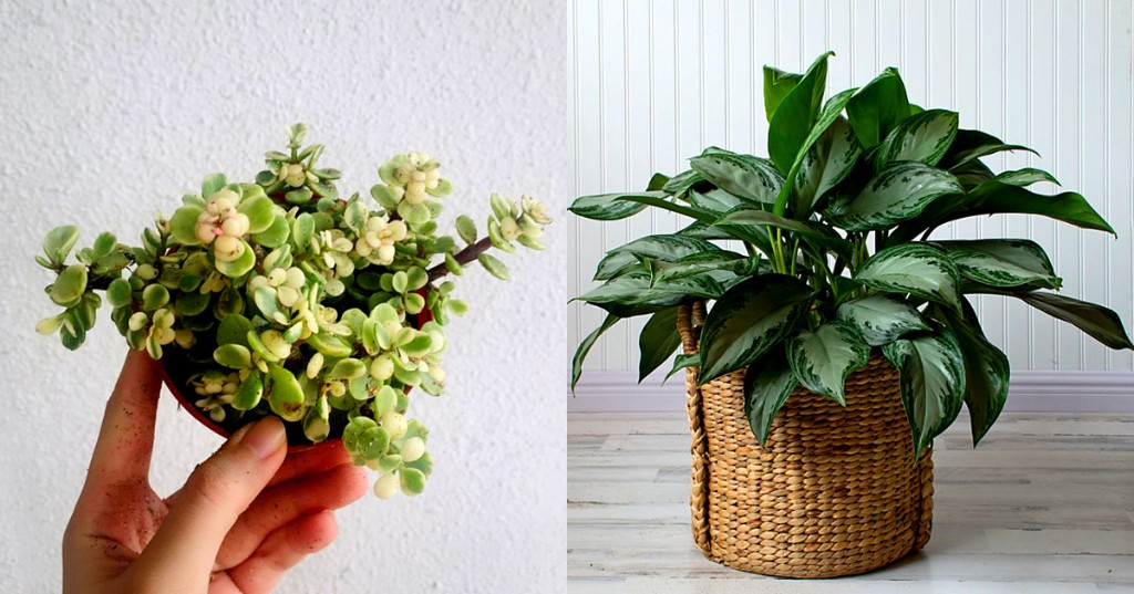 7 adorable plants you can grow indoors if you're lazy but still want to be trendy