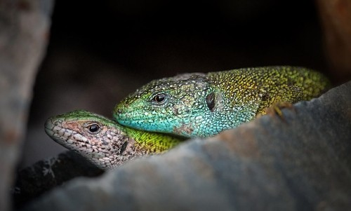 This Is The Earliest Example Of Love In The Animal Kingdom! - Science