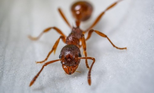 Incredible Viral Video Of An 'Ant-Sting' Is Giving Twitter Nightmares!