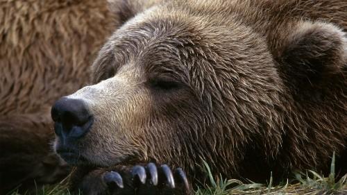 While the Bear Cam bears hibernate, the Trump admin weighs a big plan to mine their world