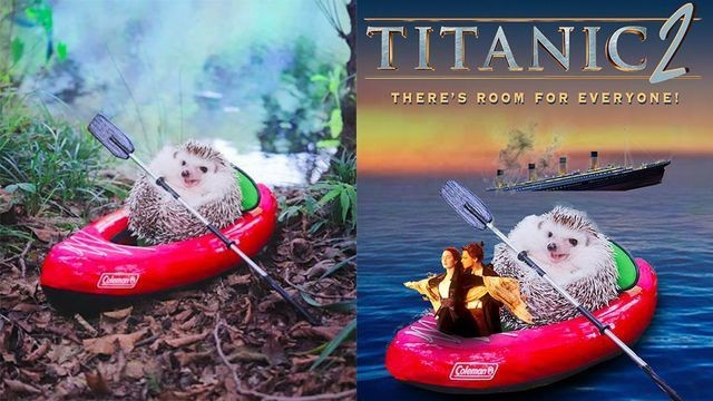 Tiny hedgehog in a canoe gets the world's cutest Photoshop battle