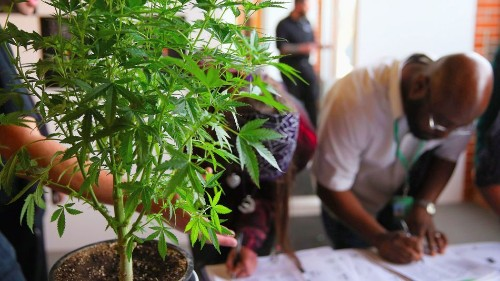 The budding cannabusiness: 5 top economic opportunities in marijuana