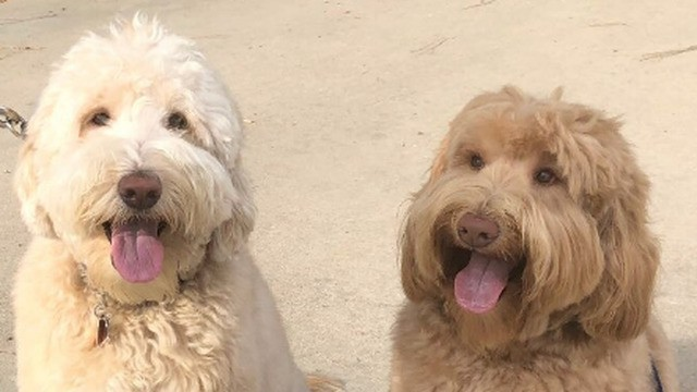 Amazing dog recognizes long-lost brother while out on a walk