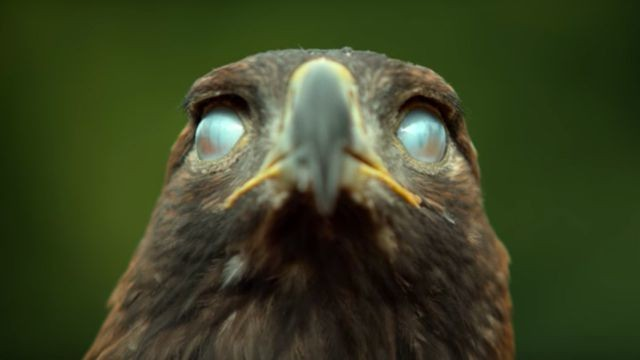 These super slow motion close-ups of birds are totally mesmerising