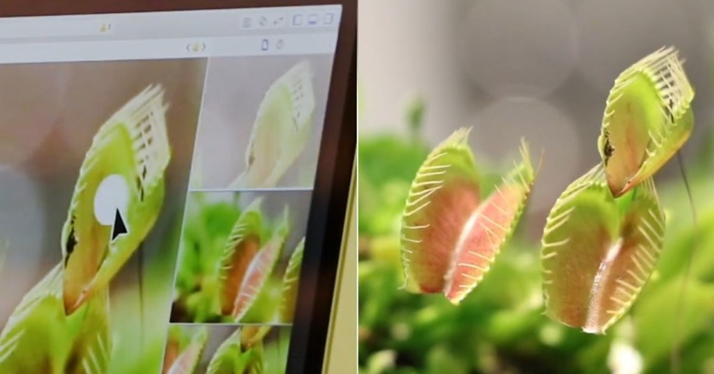'Cyborg botany' is a process that turns plants into electronic devices