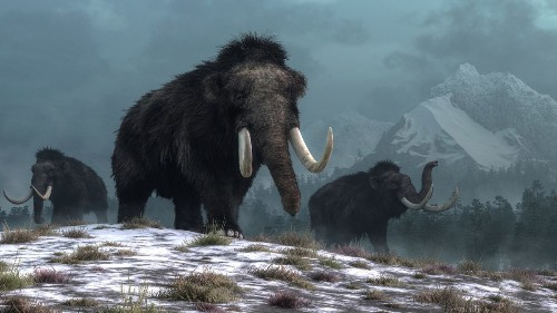 The Last Mammoths On Earth Died As They Could Not Purge Genetic Mutations