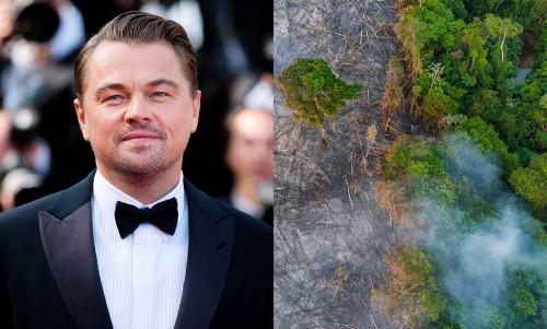 Amazon Fires: Leonardo DiCaprio's Environmental Organisation Forms $5 Million Fund